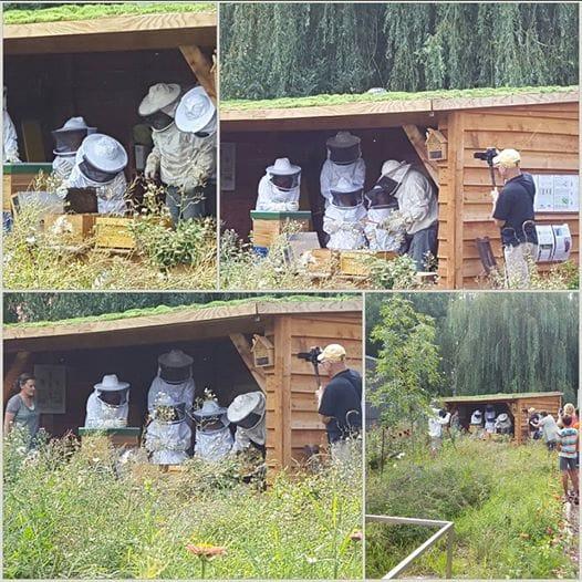 Verdeliet - Bijen - foto 3.jpg