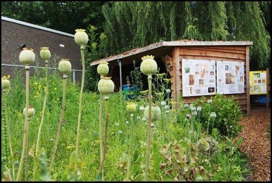 Verdeliet - Bijen - foto 4 .jpg