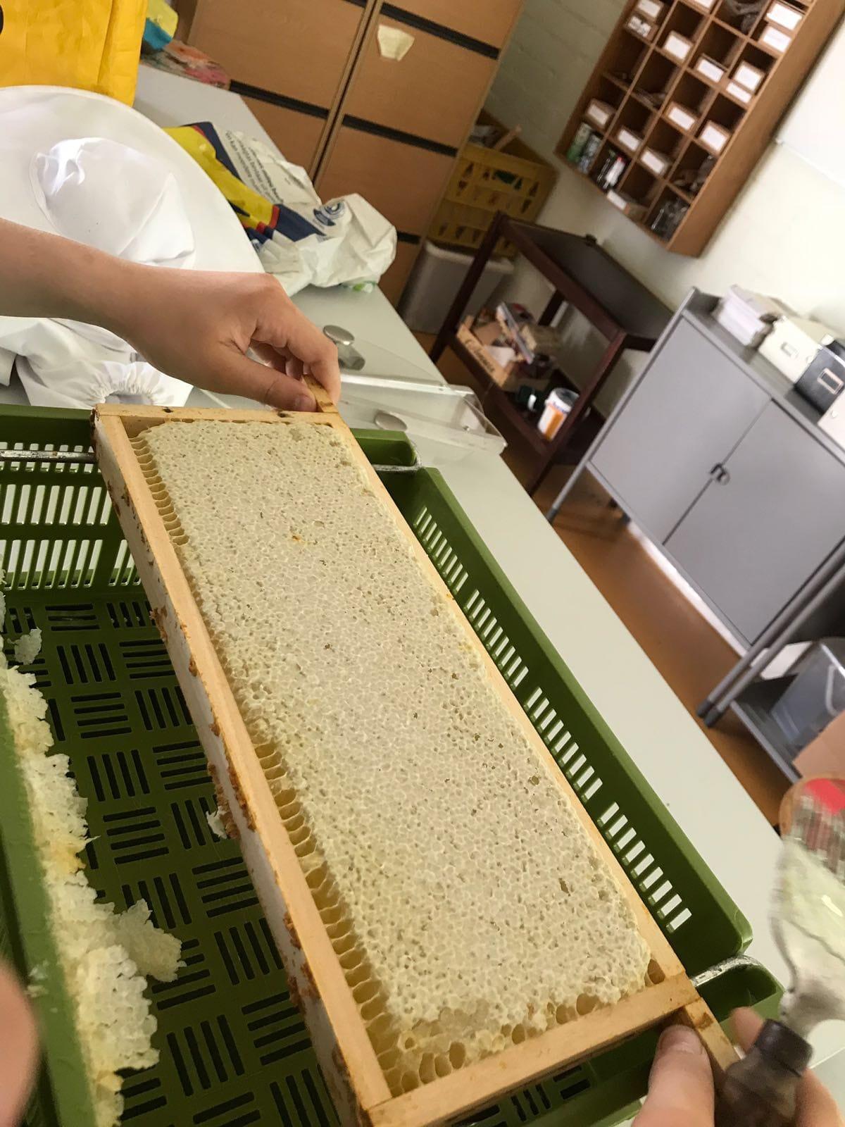 Verdeliet - Bijen - honing slingeren - foto 5.jpeg