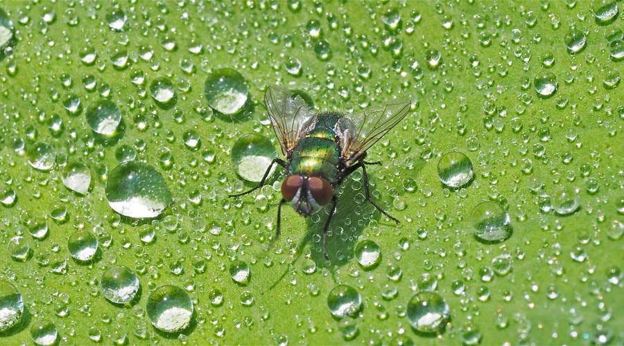 vlieg met regen